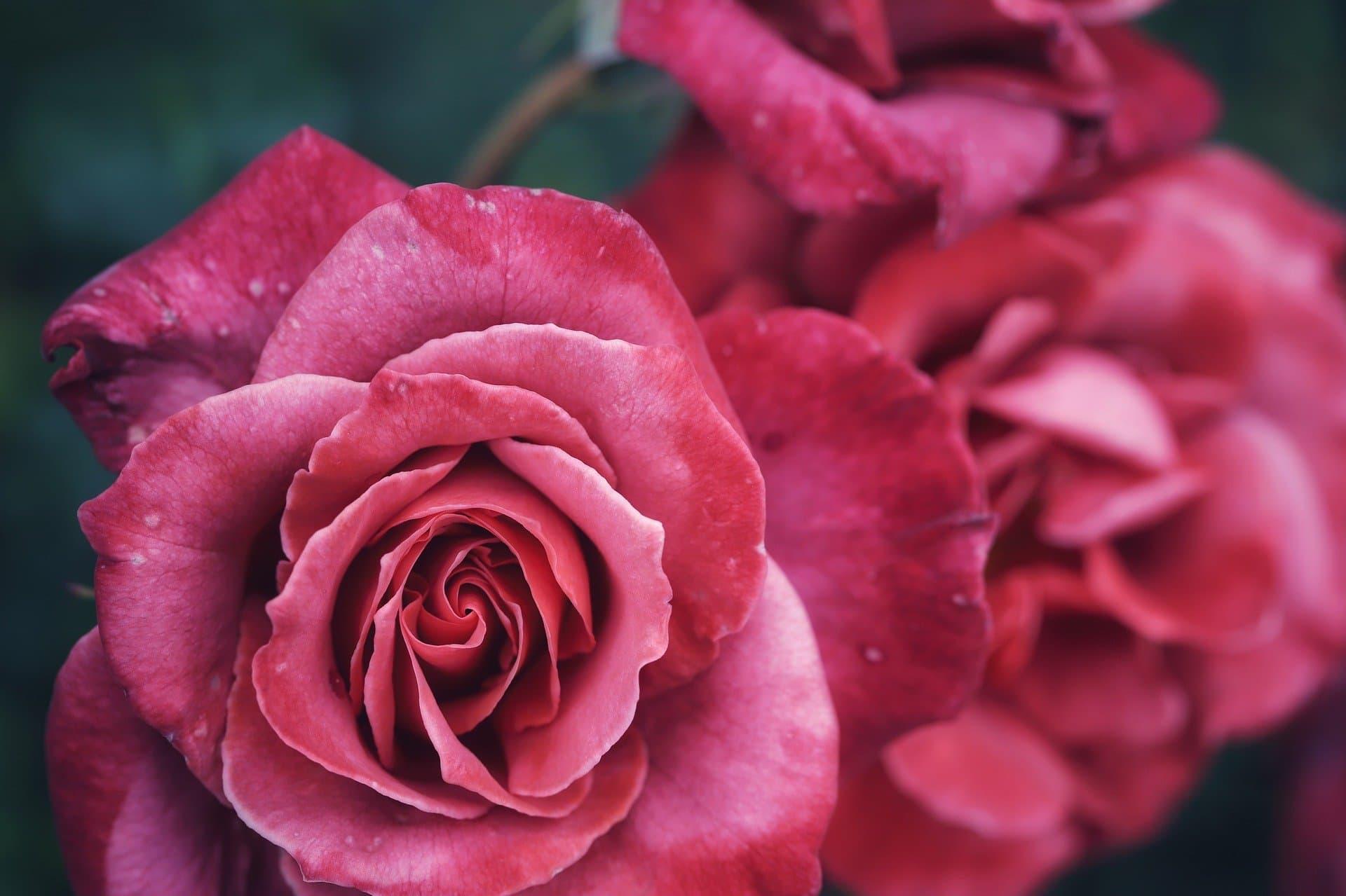 Vos fleuristes à Carcassonne, Limoux et Castelnaudary