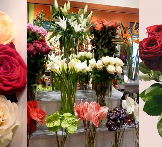 image-roses-def